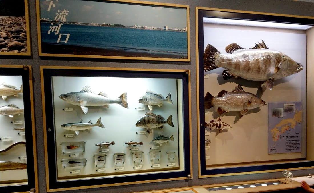 miyazakimuseum5-min