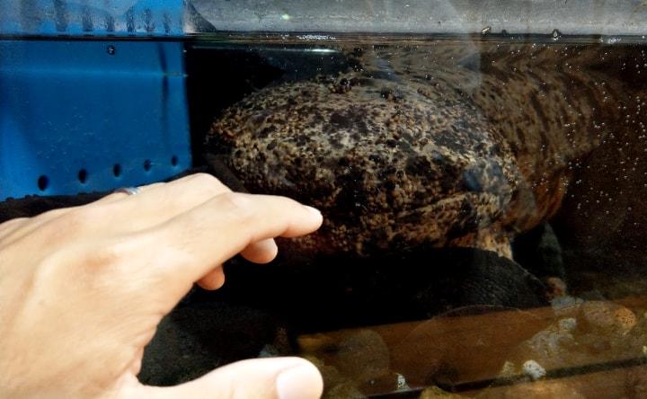 idenoyamapark-freshwaterfish-aquarium10-min