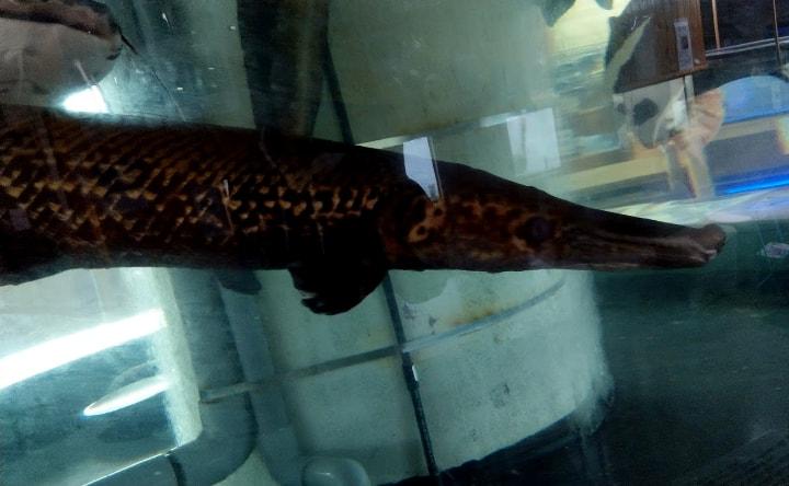 idenoyamapark-freshwaterfish-aquarium13-min