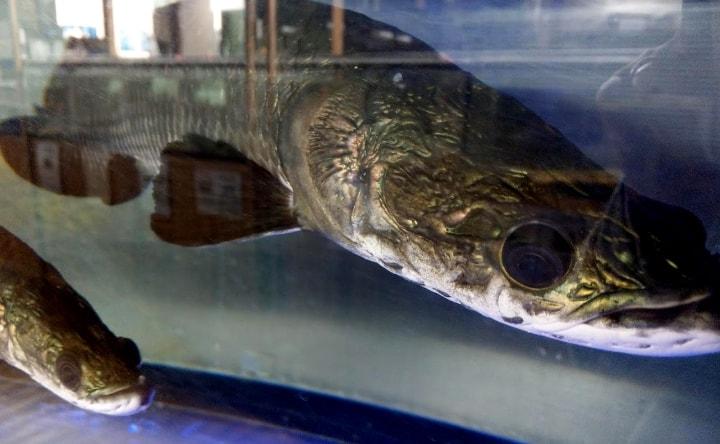 idenoyamapark-freshwaterfish-aquarium15-min