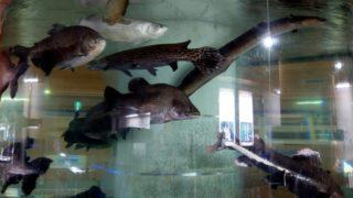 idenoyamapark-freshwaterfish-aquarium2-min