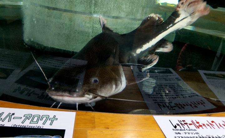 idenoyamapark-freshwaterfish-aquarium3-min