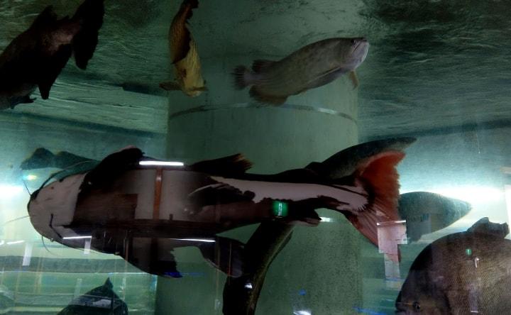idenoyamapark-freshwaterfish-aquarium4-min