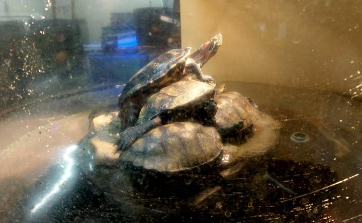 idenoyamapark-freshwaterfish-aquarium5-min