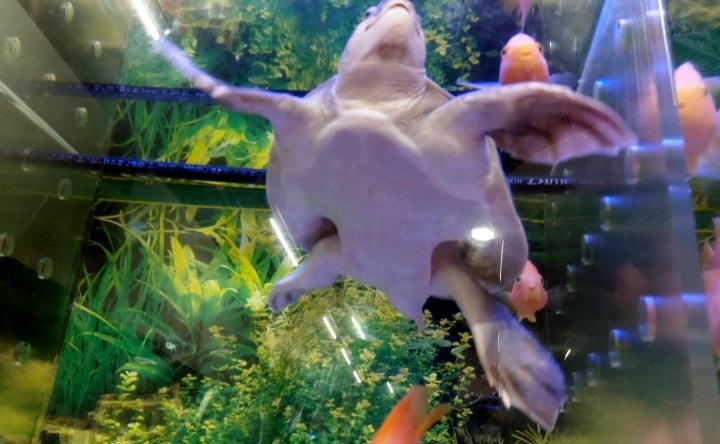 idenoyamapark-freshwaterfish-aquarium6-min