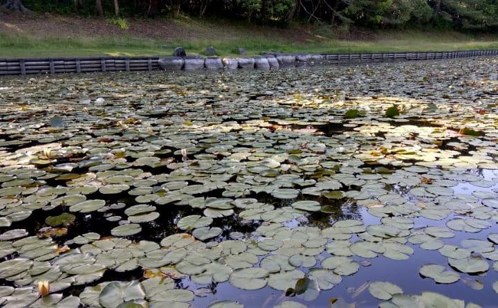 shiminnomori-park9-min