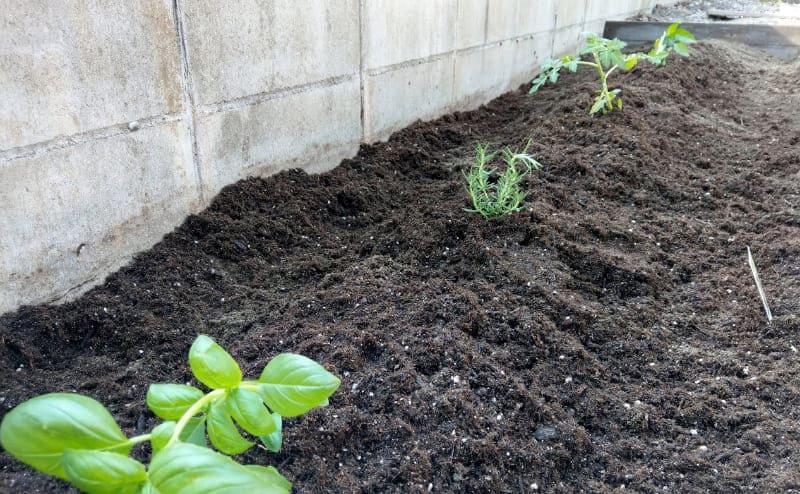 vegetablegarden11