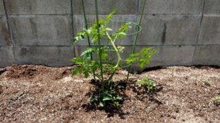 vegetablegarden2-4-min