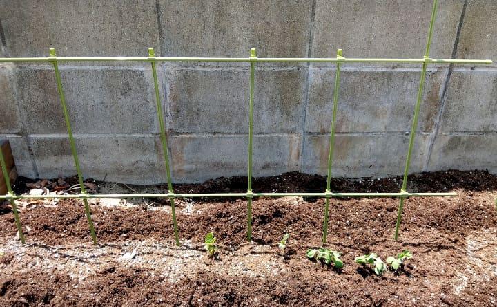 vegetablegarden2-5-min