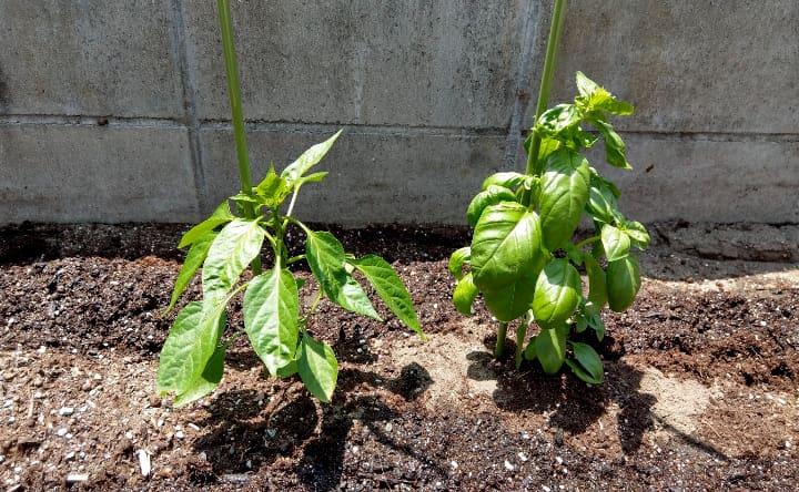 vegetablegarden2-6-min