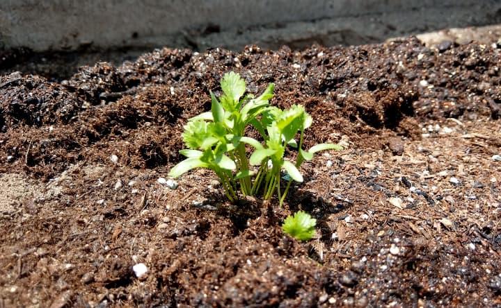 vegetablegarden2-7-min