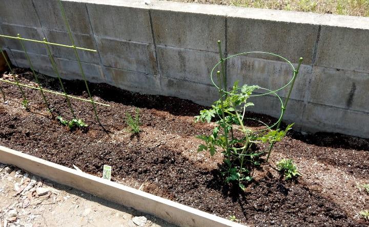 vegetablegarden2-8-min