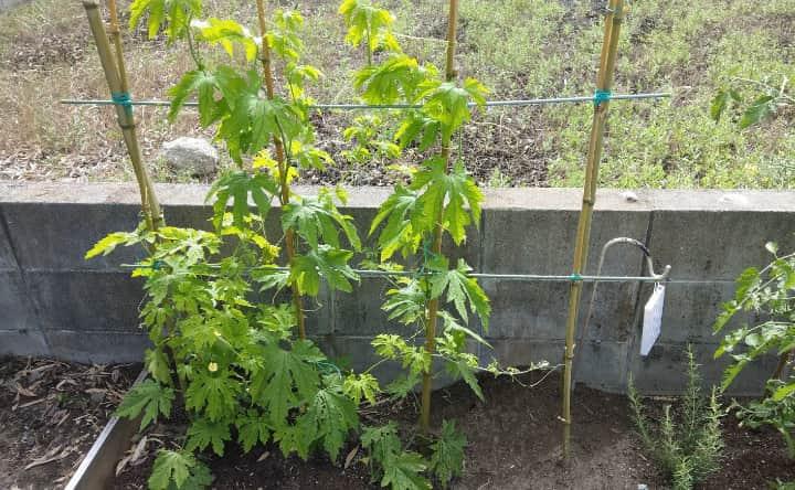 harvesting-vegetables1-min
